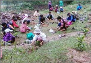 Tết trồng cây ở trường TH Thái Thủy/huyện Lệ Thủy tỉnh Quảng Bình