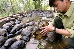 Nhân viên kiểm lâm kiểm tra những chú rùa tịch thu từ một vụ buôn lậu thú rừng ở huyện Sóc Sơn, Hà Nội hồi tháng 3, 2008. AFP photo