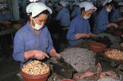 Công nhân một xí nghiệp hạt điều ở SG. AFP photo