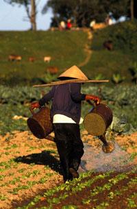 Một nông dân miền Trung VN đang tưới cây. AFP photo