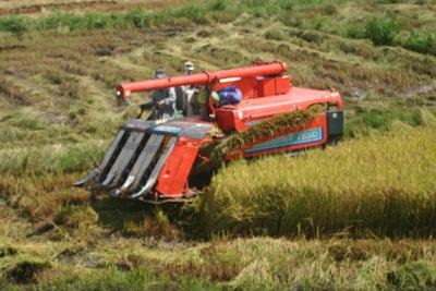 Những thửa ruộng eo óc, manh mún là cơ hội gỡ vốn của những chiếc máy gặt đời cũ. RFA photo