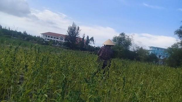 Đất bỏ hoang ở dự án làng đại học