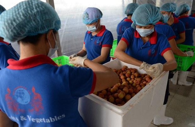 Thương mại nông sản giữa Nga và Việt Nam tăng mạnh