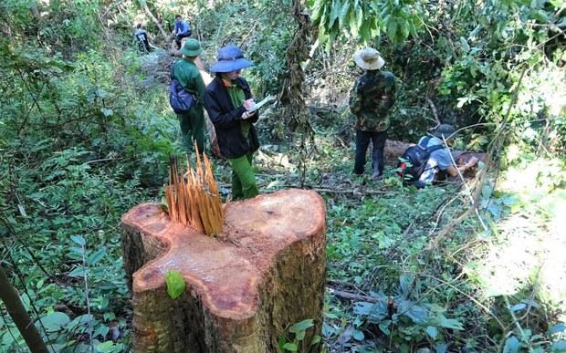 Tỉnh Đắk Lắk khởi tố 37 người phá rừng Ea Sô