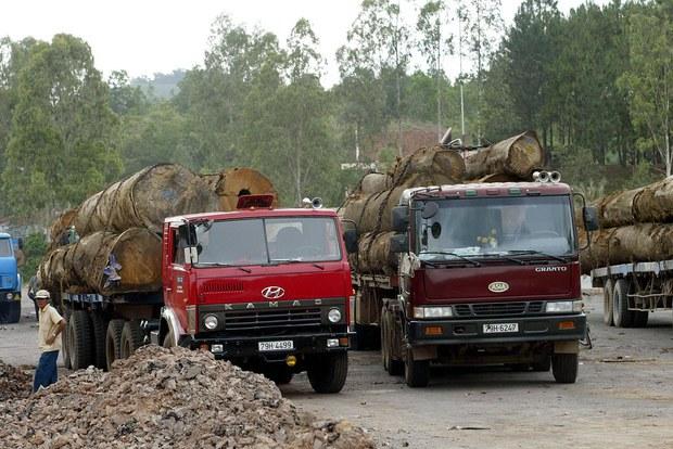 Trạm phó kiểm lâm bị bắt vì nhận hối lộ của lâm tặc phá rừng