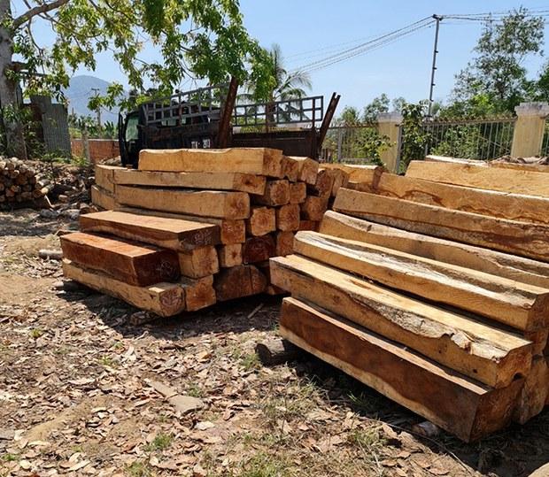 Hơn 100 cây cổ thụ rừng phòng hộ bị đốn