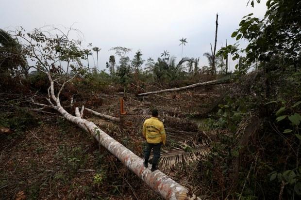 Không có dấu hiệu chấm dứt nạn phá rừng vì thiếu hụt nguồn tài trợ từ các chính phủ
