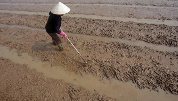 Minh họa: Một nông dân Việt Nam chuẩn bị đất trồng lúa.