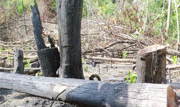 Phú Yên: Rừng bị phá trong nhiều năm, lãnh đạo nói không phát hiện vụ phá rừng nào
