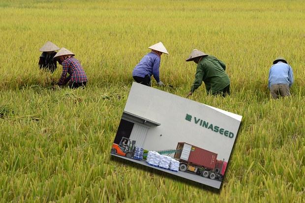 60 tấn gạo Việt Nam đầu tiên đã có mặt tại chuỗi siêu thị tại Anh