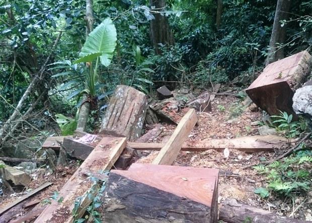 Tòa án Thanh Hóa xét xử vụ phá rừng đặc dụng Pù Luông