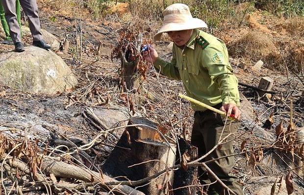 Điều tra vụ phá rừng phòng hộ ở Đà Lạt