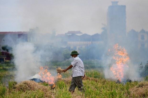 Bộ Tài nguyên và Môi trường đề nghị xử lý nghiêm việc đốt rơm rạ ngoài đồng