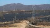 Thủ tướng cho phép chuyển 155 ha đất rừng làm dự án điện mặt trời