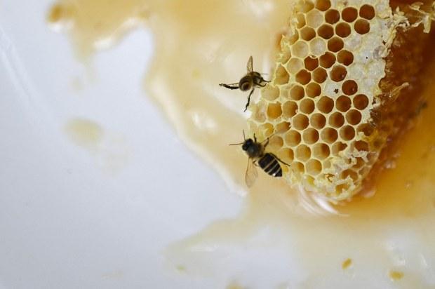 Mỹ điều tra chống bán phá giá mật ong xuất xứ từ Việt Nam