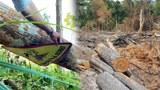 Hàng chục ngàn mét vuông rừng bị tàn phá tại Đắk Lắk, Gia Lai và Phú Thọ