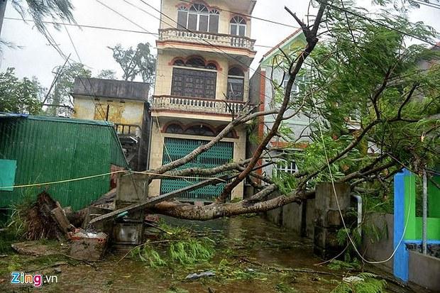 Cây bật gốc chắn ngang nhà dân ở Móng Cái ngày 19 tháng 7, 2014.