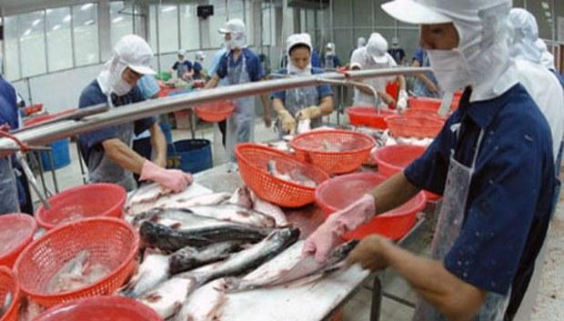 Doanh nghiệp xuất khẩu cá basa, rô phi phải tăng cường kiểm soát dư lượng kháng sinh.