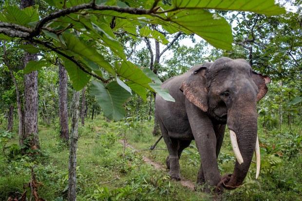 USAID khởi động hai dự án bảo tồn môi trường giúp Việt Nam giải quyết khủng hoảng khí hậu