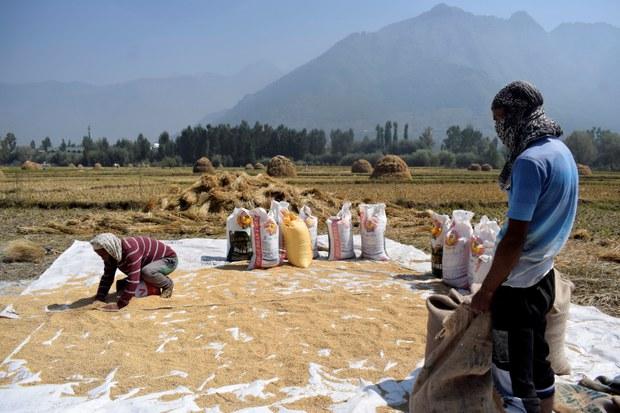 Việt Nam nhập khẩu gạo chất lượng cao từ Ấn Độ