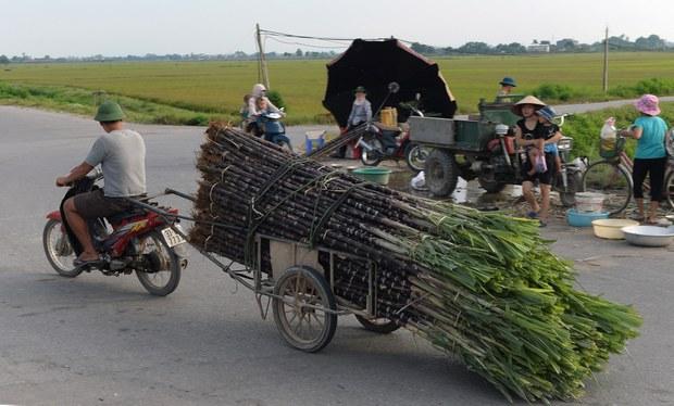 Việt Nam áp thuế chống bán phá giá đến 50% trên đường nhập từ Thái Lan