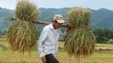 Xuất khẩu gạo của Việt Nam giảm trong 4 tháng đầu năm