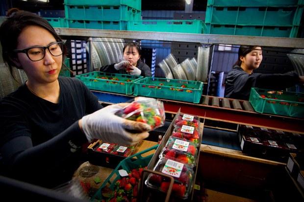 Việt Nam chuẩn thuận cơ sở an toàn sinh học mới cho trái cây Úc nhập khẩu