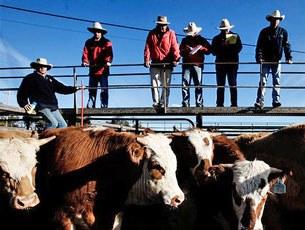 Một trang trại nuôi bò ở Queensland, Australia