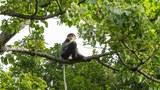Cơ sở nuôi động vật hoang dã là nguy cơ đe dọa đa dạng sinh